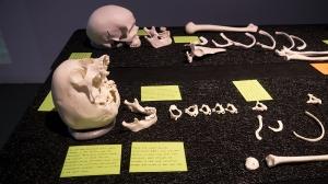 vagaries_bones_exhibit01_72dpi